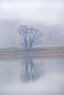 Foggy Potomac Tree 3-0 F LR 3-29-18 J114