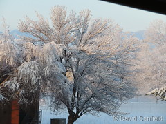 March 27, 2018 - Snow coast the trees. (David Canfield)