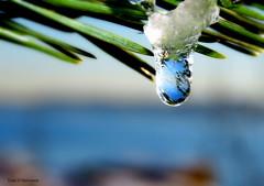 Frozen water drop! (Toini O Halvorsen) Tags: frost frozen drop frozendrop droplet sea