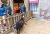 Colmar (Alsace) 30. März 2018 (karlheinz klingbeil) Tags: france sheep schaf frankreich mouton alsace animal markt tier city tradefair stadt colmar grandest fr
