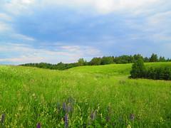 Nature. Belarus. #Belarus #nature #summer #tree #water #lake #sky (kravchenok90) Tags: summer sky tree nature lake belarus water