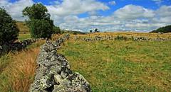 Aubrac (Yvan LEMEUR) Tags: aubrac muret muretdepierressèches lozère aveyron pastoralisme extérieur arbres nature grandsespaces france ciel landscape paysage
