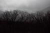 Out the Window (Harald Philipp) Tags: newzealand christchurch tranzalpine train rail journey blackandwhite bw bnw monochrome trees moody dark dreary rainy foggy cloudy lowclouds hills schwarzweiss
