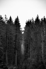 The gap (Micael Carlsson) Tags: woods forrest värmland sverige black white svart vit
