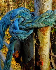 Knotted (DutchBrit1) Tags: weathered blue knot rope rust