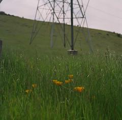 Bernal Ranch // Santa Teresa County Park (bior) Tags: hasselblad500cm portra160nc kodakportra portra mediumformat 6x6cm 120 square santateresacountypark bernalranch poppy californiapoppy wildflower grass hillside hiking expiredfilm carl zeiss planar