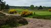 Hankley Common and Golf Course-E4240198 (tony.rummery) Tags: bunker em10 farnham flag golf golfcourse green hankleycommon landscape mft microfourthirds omd olympus path pin surrey tee elstead england unitedkingdom gb