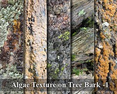 Algae Texture on Tree Bark -1 (stockgraphicdesigns) Tags: algae background bark brown environment forest fungus green grunge moss natural nature pattern plant surface texture textured timber tree water weed wet wood wooden