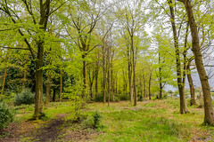 Haywood 29th April 2018 (boddle (Steve Hart)) Tags: haywood 29th april 2018 a hrefhttpswwwflickrcomphotosboddlealbums72157692389582061spring 2018a wild wilds wildlife nature natural boddle spring canon5d4 canon6d steve hart steven bruce wyke road wyken coventry united kingdon england great britain canon 5d mk4 6d 100400mm is usm ii 2470mm standard life bird birds flowers flower fungii fungus insect insects spiders butterfly moth butterflies moths creepy crawley winter summer autumn seasons sunset weather sun sky cloud clouds panoramic landscape