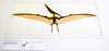 Pteranodon - Creature From Another Age (Steve Taylor (Photography)) Tags: pteranodoncreature dinosaur museum naturalhistory art digital brown mauve white uk gb england greatbritain unitedkingdom london highkey sign fossil naturalhistorymuseum