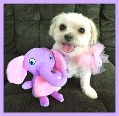 We Wish Our Friends A Blessed Easter. (marilyntunaitis) Tags: bella stuffedanimal plush elephant easter