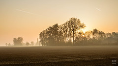 Morning time (Jean-Luc S) Tags: canoneos7d brainelalleud brabantwallon belgium belgique solojlm sollièrejl field morning shadows fog brumes boisdehalle
