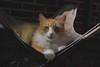 the many faces of Jimmy (a set) (rootcrop54) Tags: jimmy orange ginger tabby male cat lounge chair catenclosure neko macska kedi 猫 kočka kissa γάτα köttur kucing gatto 고양이 kaķis katė katt katze katzen kot кошка mačka gatos maček kitteh chat ネコ