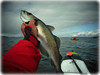 Kayak Scotland (Nicolas Valentin) Tags: scotland fish kayak pollock