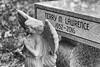 TML, RIP, WM B&W (marylea) Tags: apr22 2018 cemetery tml terry blackandwhite blackwhite bw grasslake michigan terrymlawrence terrylawrence friend angel grave gravestone gravemarker