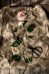 Broken... (CarolienCadoni..) Tags: sony sal50f14 sonyilcaa99m2 rose broken still stilllife light shadows shadowandlight f7d kapot