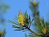 wiosna / springtime (Adam Żabiński) Tags: wiosna kwiaty sprigtime flowers przyroda natura nature