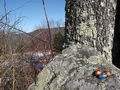 EASTER BUNNY WAS HERE (photodittmer) Tags: stumpsprouts massachusetts easter rock tree lichen chocolate easteregg spring