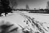 Дорога в город (Esha Yaz) Tags: река видысъемки дорога погода день снег деревья времясуток город времягода солнце мост строения весна место улица водныеобъекты городскойпейзаж