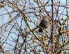 9Q6A8660 (2) (Alinbidford) Tags: alancurtis alinbidford brandonmarsh dunnock nature wildbirds wildlife
