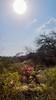 Paradise (Ibrahim Hamaty) Tags: ngc saudiphotography saudiarabia flowers paradise jazan spring razanvalley