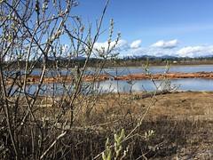 Spring on the Fraser (misiekmintus) Tags: vancouver bc canada fraser fraserriver