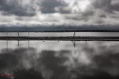 Laguna Salada de Carhue (Ramiro Francisco Campello) Tags: carhue laguna sal aves nubes cielo paisaje naturaleza nature lake bird cloud clouds epecuen buenos aires argentina ruinas abandono
