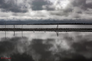 Laguna Salada de Carhue