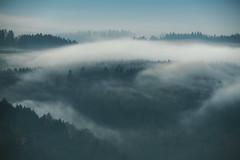 Spring Fog (stephan_amm) Tags: frankenwald oberfranken franken germany mood spring fog nebel wald