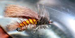 F_Stim-vm (Guyser1) Tags: fly fishingfly stimulator westyellowstone nikond3200