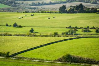 Sussex Downs Sunshine 2