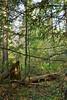 DSC_9808 (sevbette) Tags: лес осень