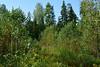 DSC_9816 (sevbette) Tags: лес осень