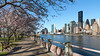 Roosevelt Island (Robert Wash) Tags: newyork ny newyorkcity nyc manhattan rooseveltisland eastriver un unitednations cherry