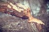 Dentagard feeling - part 11/13 (madtacker) Tags: outdoor natur makro detail vintage art bokeh steinheilmünchen doppelanastigmat unofokal f45 16 5cm nikon d800 deutschland germany