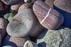 pebblesIMG_6110 (mandyerush) Tags: pebbles seaweed sea minch isle skye otterburn driftwood lesser celadine crustacean beach fairy