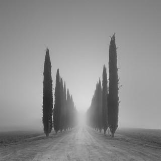 Viale della nebia.