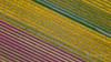 The Farmers (Ellen van den Doel) Tags: 2018 lines pro tulip voorjaar flower abstract aerial goeree bulb drone overflakkee landschap mavic natuur landscape nautre lente bollenstreek bulbfield tulp tulpenveld dji