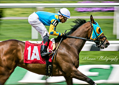 Maimo (EASY GOER) Tags: belmontpark horseracing equine thoroughbred horses racing horse