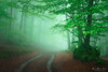 In the forest (Mimadeo) Tags: forest path spring springtime fog trail footpath trees wet foggy natural leaf misty mist beech branch nature landscape morning leaves green light sunlight mystery mysterious pathway beautiful gorbea mood moody atmosphere atmospheric