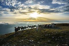 Rebaño de cabras en Beriain by Jabi Artaraz - Contraluz al rebaño con nubes bajas en el valle y el sol saliendo en el horizonte. Calma tranquila y sosegada en ese lugar...