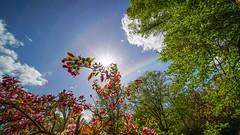 Rainbow (YᗩSᗰIᘉᗴ HᗴᘉS +15 000 000 thx) Tags: rainbow sky flower flora clouds hensyasmine namur belgium europa aaa namuroise look photo friends be wow yasminehens interest intersting eu fr greatphotographers lanamuroise tellmeastory laowa 12mm