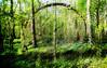 bos in werking (roberke) Tags: trees bomen bos forrest green groen photomontage photoshop layers lagen surreal fantasy beweging creation creative creatief