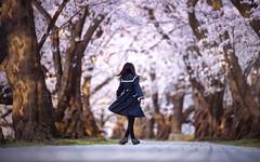 Sakura (のの♪) Tags: 桜 sakura girl