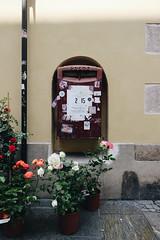 Fiori e lettere (matteoguidetti) Tags: flowers roses fiori mail colors city urban città parma parma2020 nature paesaggiourbano