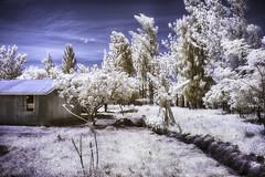 bunkhouse - awasi, kenya (greg westfall.) Tags: gregwestfall infrared color 720nm canon 35mm lifepixel kenya awasi bunkhouse