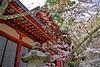 A Cherry tree with the Shrine (tez-guitar) Tags: shrine cherryblossom cherry tree architect bloom blossom flower petal spring pentax pentaxart