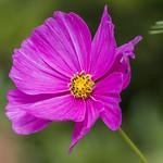 flowering thumbnail