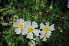 (Marwanhaddad) Tags: flowers macro spring forest