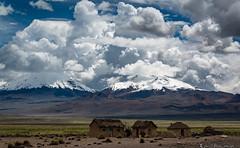 The Twins- Nevados de Payachata (Bill Bowman) Tags: bolivia altiplano sajamanationalpark nevadosdepayachata pomarate parinacota volcanoes llamas cumulusclouds punagrassland